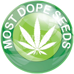 logo%20most%20dope%20seeds%20small%20250%20.png