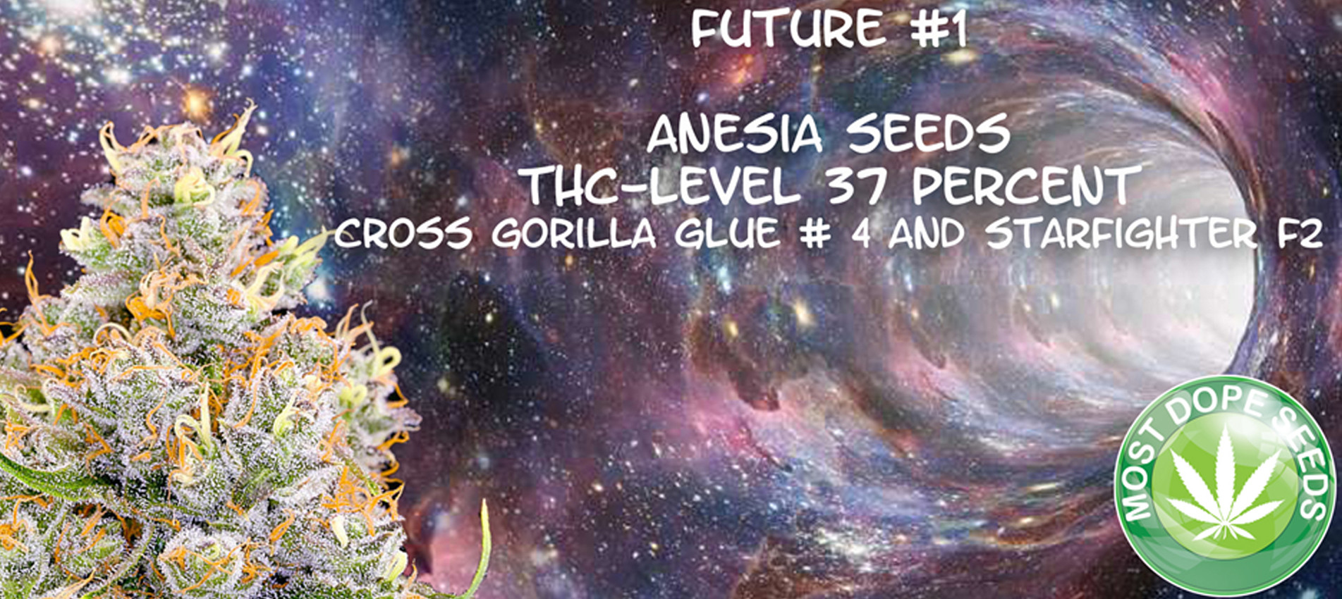 Future #1 Anesia Seeds