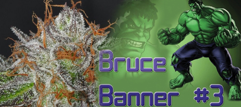 Bruce Banner Weed Canabis Marihuana